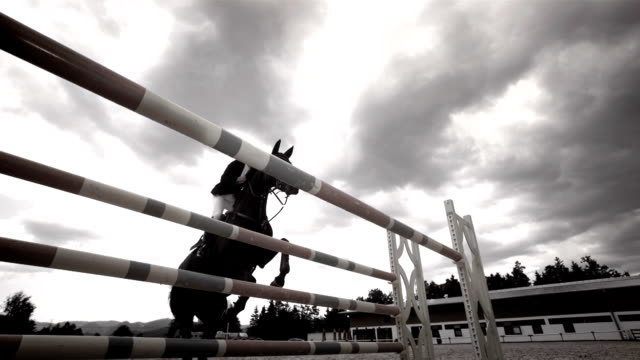 super zeitlupe, hd: professionelle show jumping - pferd stock-videos und b-roll-filmmaterial