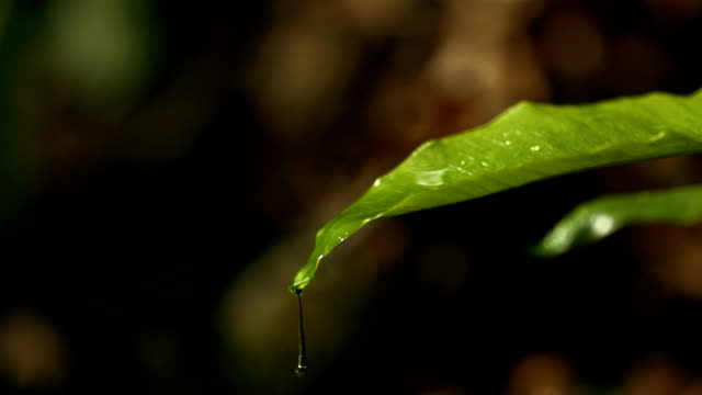 HD Super Slow-Mo: Raindrops Falling On A Green Leaf