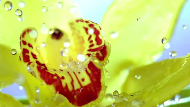 HD Super Slow-Mo: Spraying A Flower