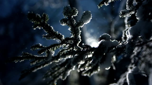 hd super slow-mo: spruce twig in snow - twig stock videos & royalty-free footage