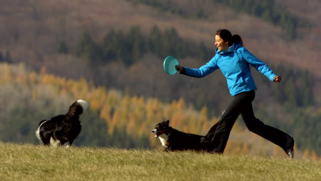 hd super slow-mo: woman and dogs playing with plastic disk - disk stock videos and b-roll footage