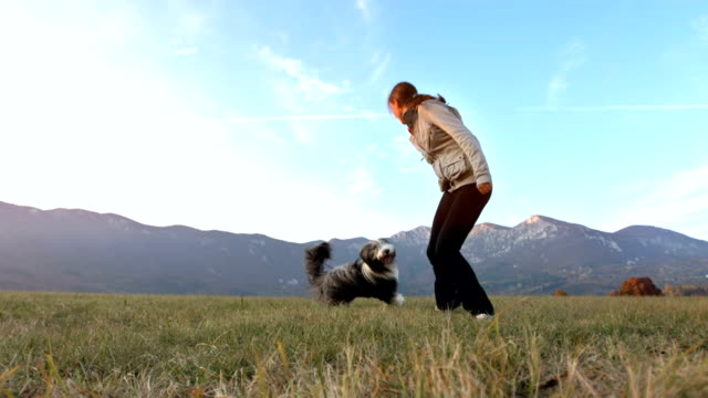 hd super slow-mo: young woman playing with her dog - collie stock videos & royalty-free footage