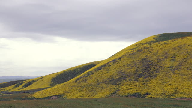 vídeos de stock e filmes b-roll de superbloom: hillside daisy in bloom in temblor range, carrizo plain, california - sul da califórnia