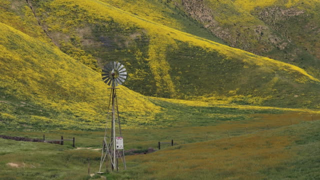 Superbloom: Windmill turning in Temblor Range, with Hillside Daisy and Fiddleneck in bloom, Carrizo Plain, California