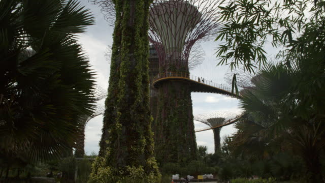 supertree grove from below / singapore - renewable energy stock videos and b-roll footage