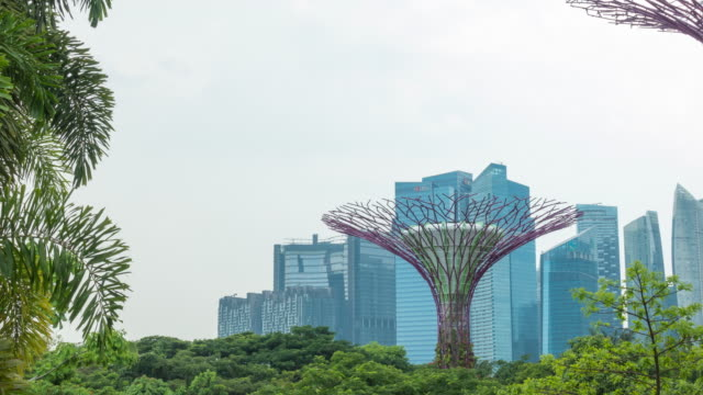 4k tl: supertree grove in singapore city. - grove stock videos & royalty-free footage