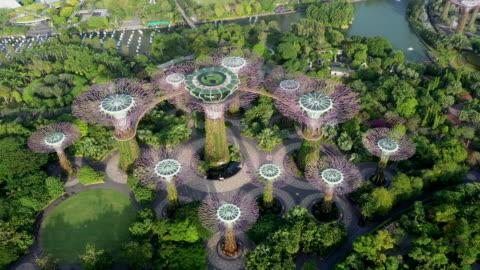 vidéos et rushes de supertree grove of gardens by the bay / downtown core, singapore - singapour
