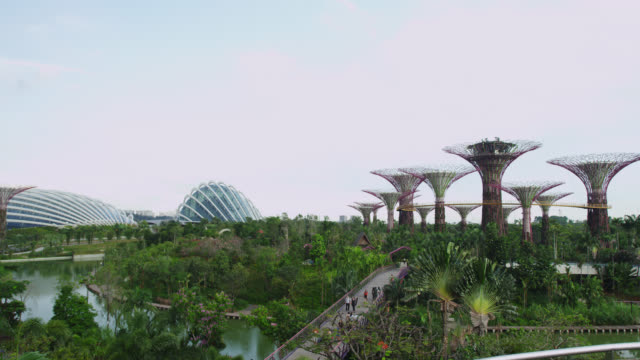 supertree groves at the gardens by the bay - grove stock videos & royalty-free footage