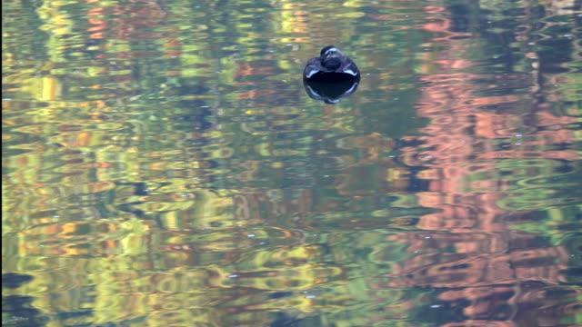 surface of autumn lake - bird - satoyama scenery stock videos & royalty-free footage