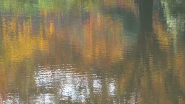 surface of autumn lake. - satoyama scenery stock videos & royalty-free footage
