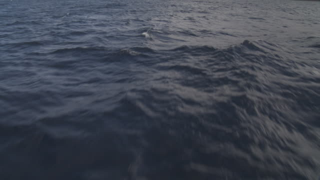 stockvideo's en b-roll-footage met surface of pacific ocean, tahiti, french polynesia - stille zuidzee