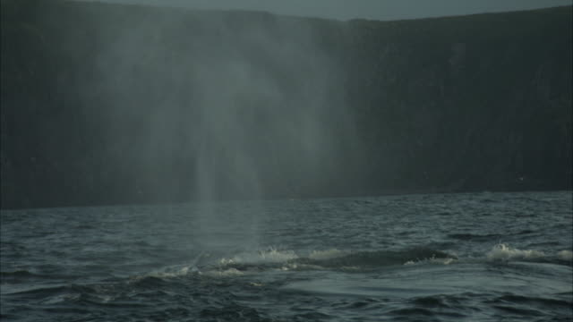 stockvideo's en b-roll-footage met a surfacing whale blows water and slaps its flukes off the coast of newfoundland. - spuitgat
