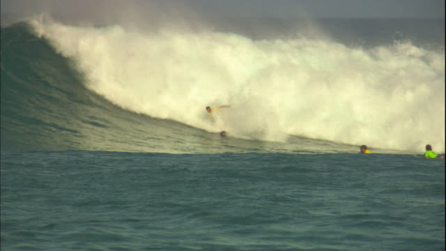 stockvideo's en b-roll-footage met a surfer rides a large wave and wipes out. - oahu