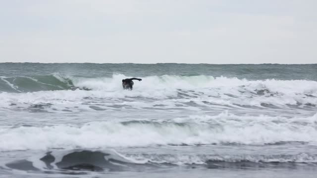 surfer riding waves in cold weather - diving suit stock videos and b-roll footage