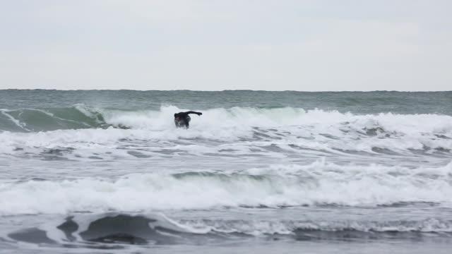 vídeos de stock, filmes e b-roll de surfista surfando ondas em tempo frio - diving suit