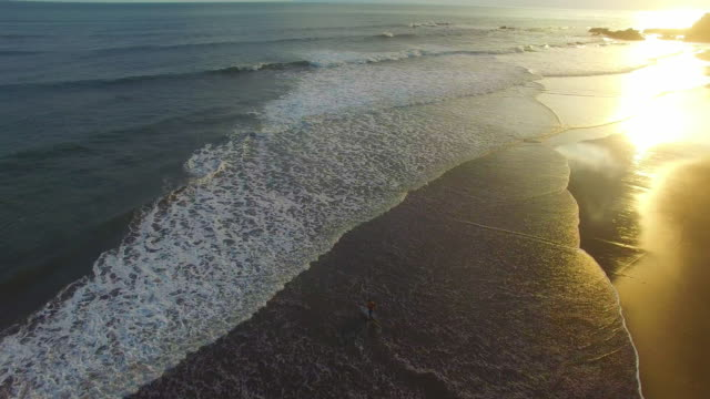 a surfer walks out into the water at sunset at balian beach, bali. - camminare nell'acqua video stock e b–roll
