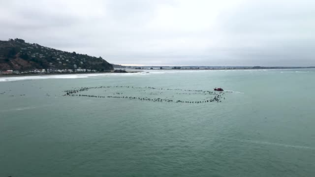 surfers form a circle at sea to remember victims of the christchurch mosque attacks on march 23 2019 in christchurch new zealand 50 people were... - murder stock videos & royalty-free footage