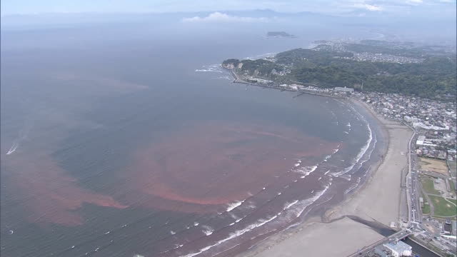surfers paddle their way through waters tinged with red tide off yuigahama beach which was caused by the mass generation of noctiluca and other... - red tide stock videos & royalty-free footage