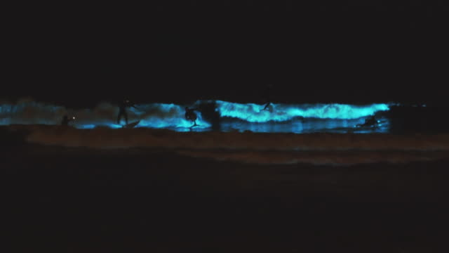 surfers surfing in glowing bioluminescent waves at night. - coastal feature stock videos & royalty-free footage