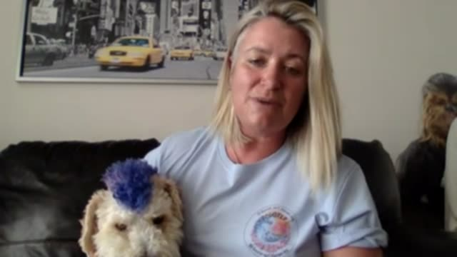 surfing dog hopes to win big at wave riding competition; england: west sussex: int kirstie coy-martin 2 way interview via internet - scooter... - curiosity stock videos & royalty-free footage