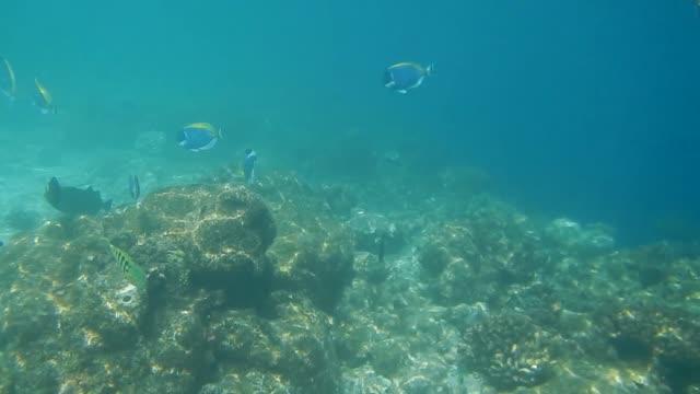 surgeonfish and unicornfish on the edge of maldivian coral reef - unterwasserkamera stock-videos und b-roll-filmmaterial