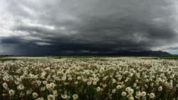 surreal clouds over dandelion field in spring. big storm