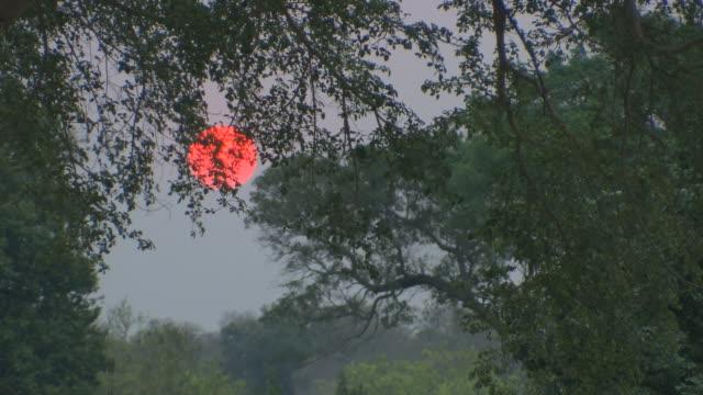 stockvideo's en b-roll-footage met surreal sun. - wildreservaat