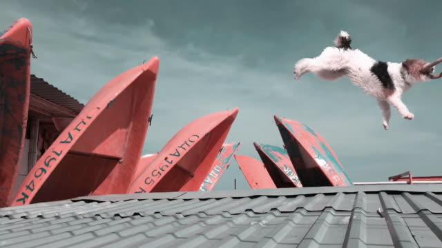 surreale zeitraffer - langsam stock-videos und b-roll-filmmaterial