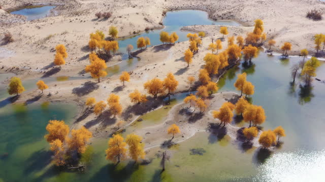 surrounded by desert, the lake is full of populus euphratica forests - reservoir stock videos & royalty-free footage