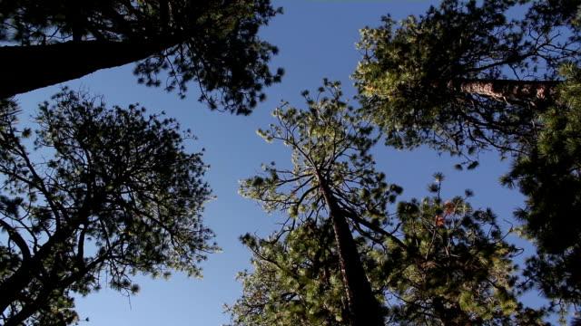 Rodeada por pines
