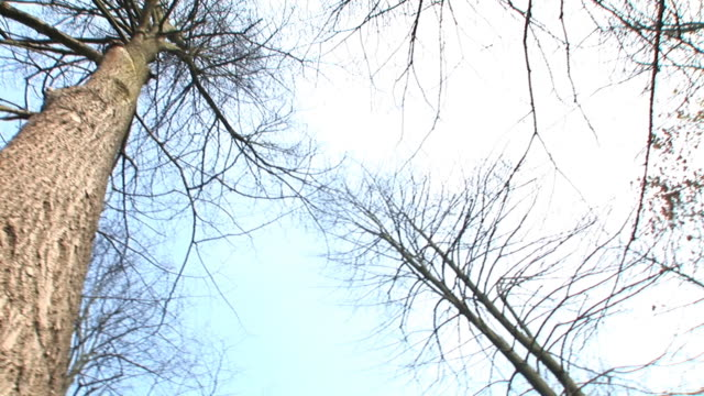hd: surrounded by trees - spinning point of view stock videos & royalty-free footage