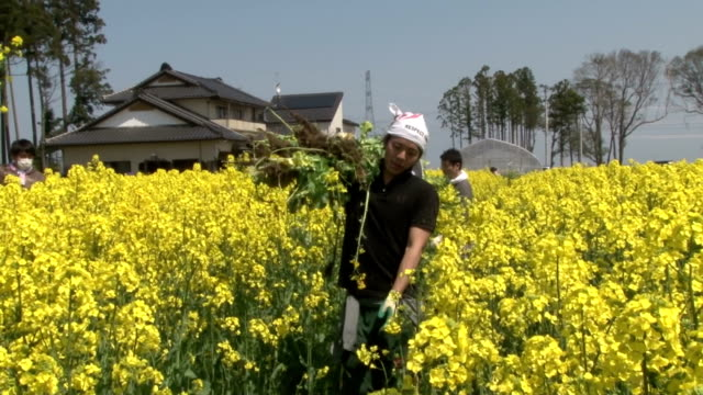 A survivor of 2011 mega earthquake and tsunami in Fukushima Prefecture has turned his fields of rape flowers into a maze wishing to bring back smile...