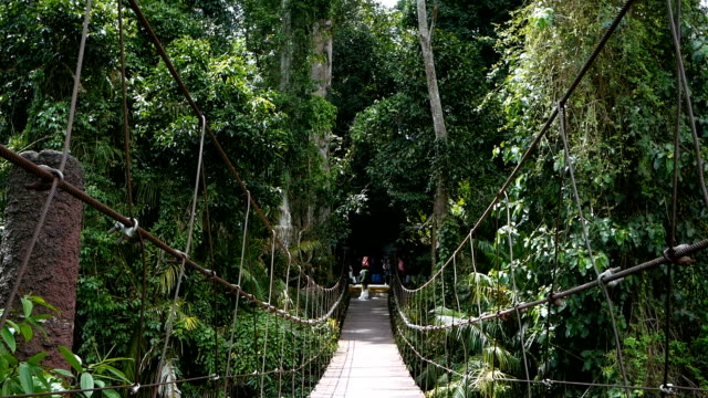 suspension bridge in the tropical rainforest - suspension bridge stock videos & royalty-free footage