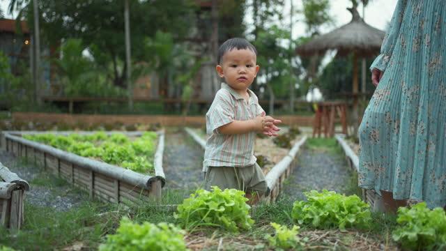 sustainable lifestyle - preschool stock videos & royalty-free footage