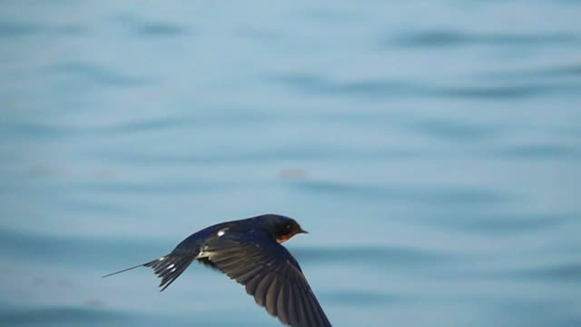 swallow flying slow motion - songbird stock videos & royalty-free footage
