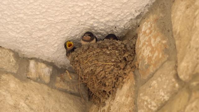 ツバメの巣 - 鳥の巣点の映像素材/bロール