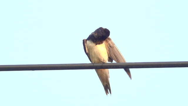 swallow on a power line - steel cable stock videos & royalty-free footage