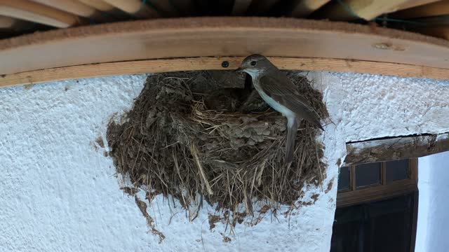 swallow's nest under the roof of the house. - small group of animals stock videos & royalty-free footage