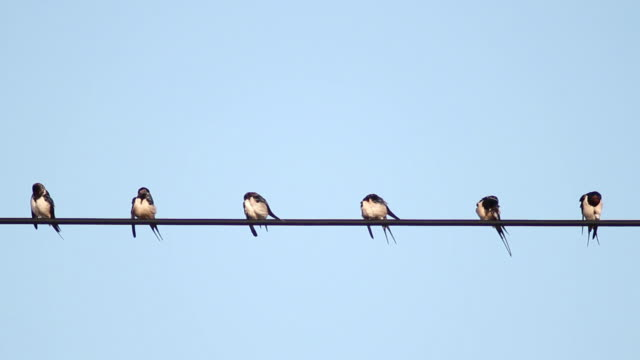 swallows - wire stock videos and b-roll footage