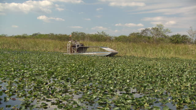 ws pov swamp boat / fort lauderdale, florida, united states - everglades national park stock videos & royalty-free footage