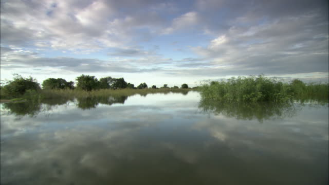 ws pov swamp, cambodia - boat point of view stock videos & royalty-free footage