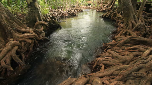 swamp forest 1080 p - biscayne bay stock-videos und b-roll-filmmaterial