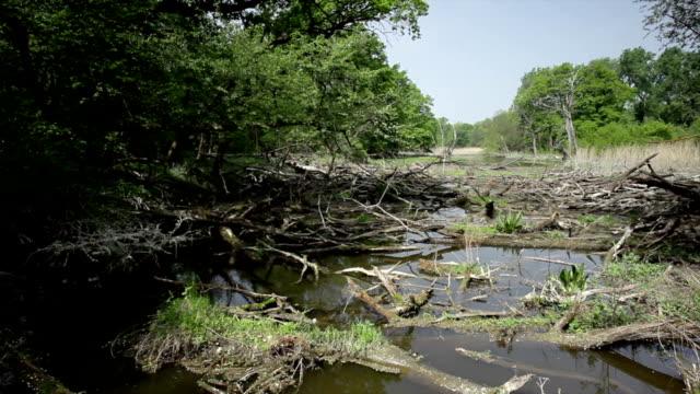 vídeos de stock, filmes e b-roll de pântano floresta; hd dolly - pântano salgado