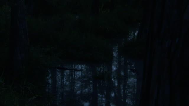 a swamp reflects tall trees in florida at night. - 低湿地点の映像素材/bロール