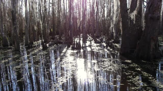 vidéos et rushes de swamp, trees, tree stumps, algas, louisiana, usa - marécage