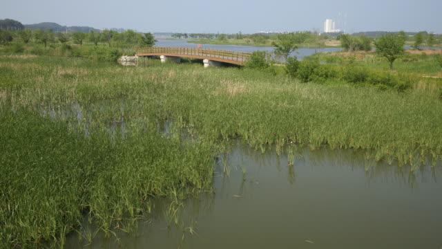 vídeos y material grabado en eventos de stock de swampland at gangneung - pantano zona húmeda