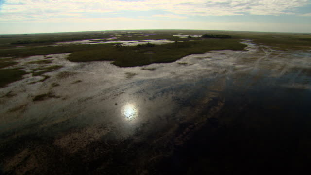 swamps reflect the sun and clouds in the everglades. - sumpf stock-videos und b-roll-filmmaterial