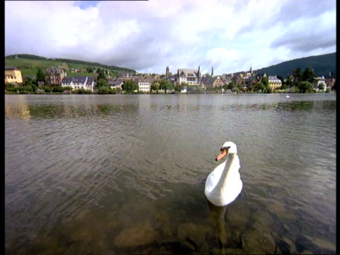 A swan floats in the Mosel River near a waterfront village in Bavaria, Germany.