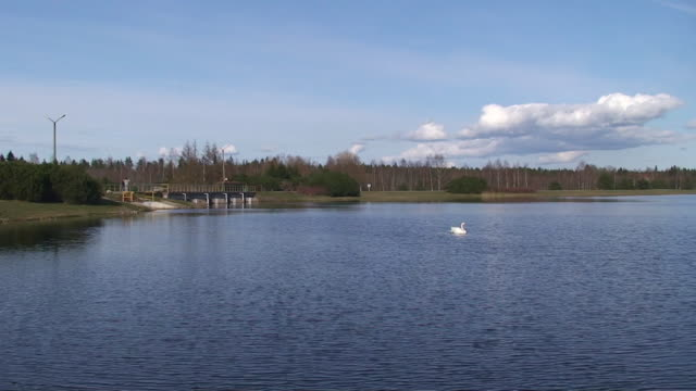 swan in the lake - mute swan stock videos & royalty-free footage