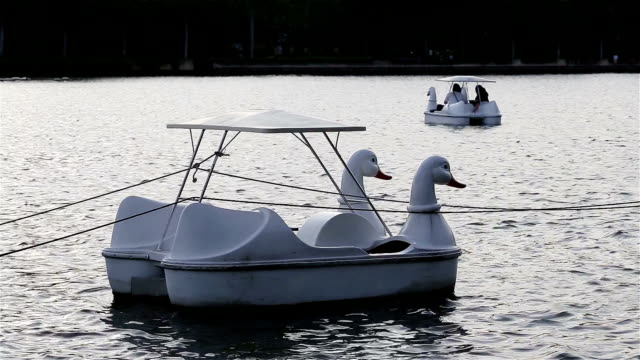swan in pedalò a virgola mobile di un laghetto nel parco centrale - cigno video stock e b–roll